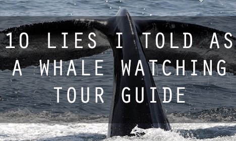whale watching lies