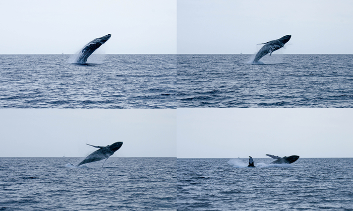 whaleseries2