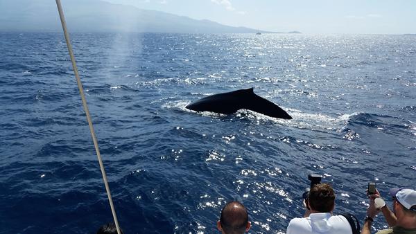 whaletour