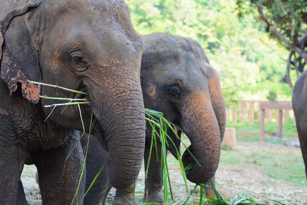 backpacking thailand elephants