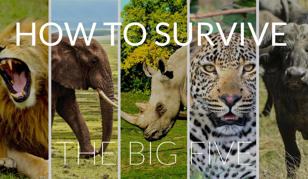 "How to Survive the ""Big Five"" in Africa"