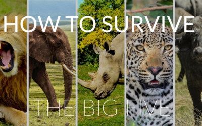 """How to Survive the """"Big Five"""" in Africa"""